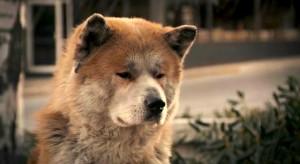 只有遺棄狗的主人,沒有遺棄主人的狗。 There're only masters who abandon their dog, no dog ever abandon their master.
